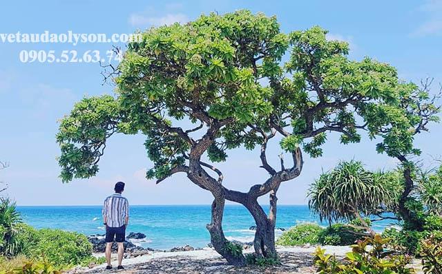 Cây cô đơn ở Bãi Tây Đảo Bé