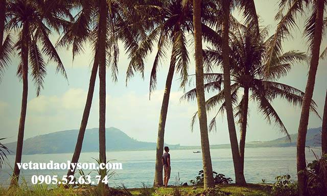 Hàng Dừa xinh đẹp tại Đảo Bé