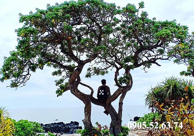 Check-in Bãi Tây với cây cô đơn
