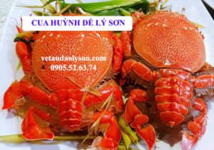 Cua huỳnh đế Lý Sơn